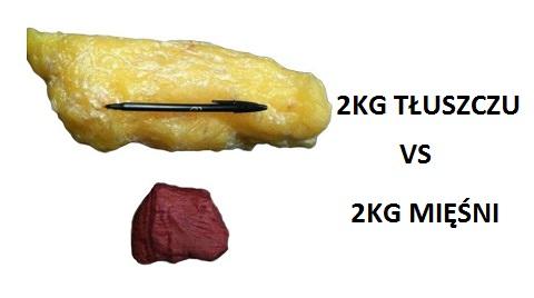 tkanka-tluszczowa-1